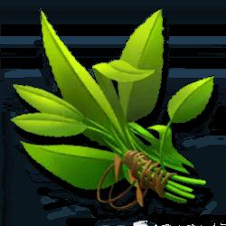 common-herbs